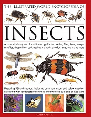 The Illustrated World Encyclopedia of Insects By Walters, Martin
